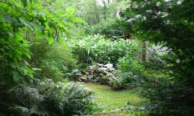 Co je Jedlý (pra)les?