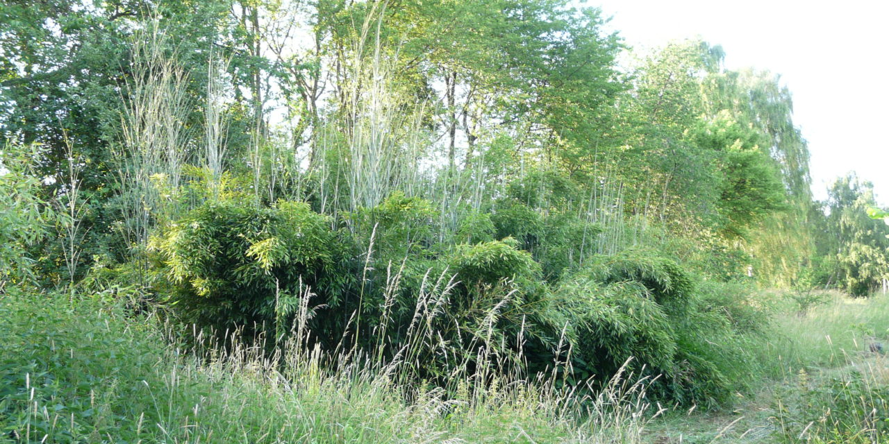 Partner pro Jedlý (pra)les