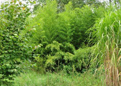 bambusovy hajek