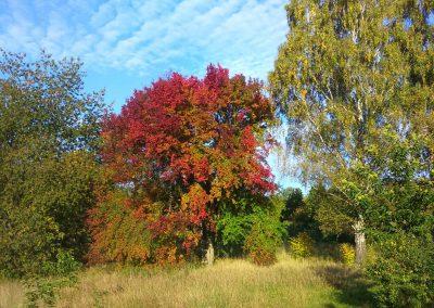 jedly prales - polnicka