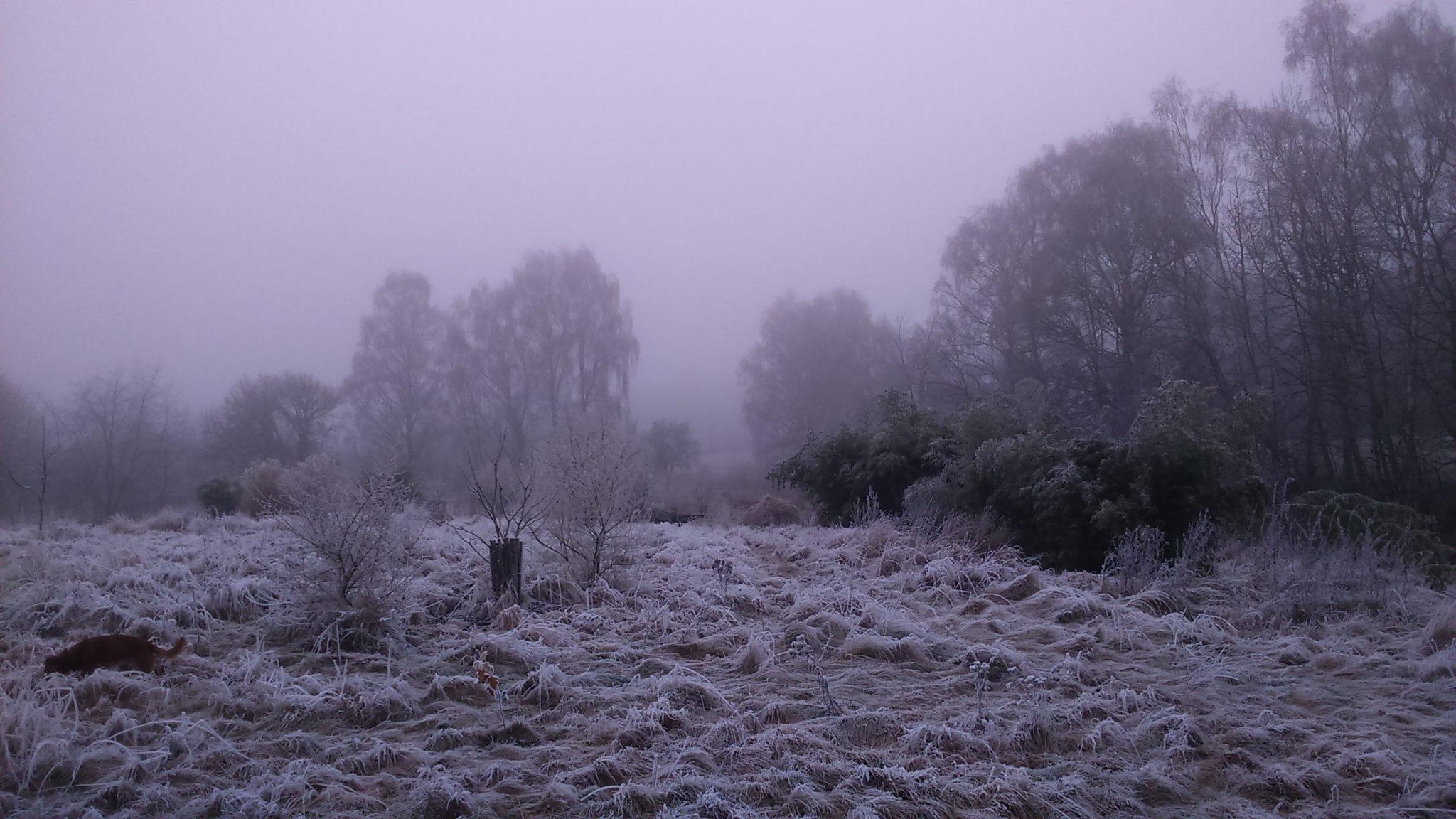 jedly prales - zima