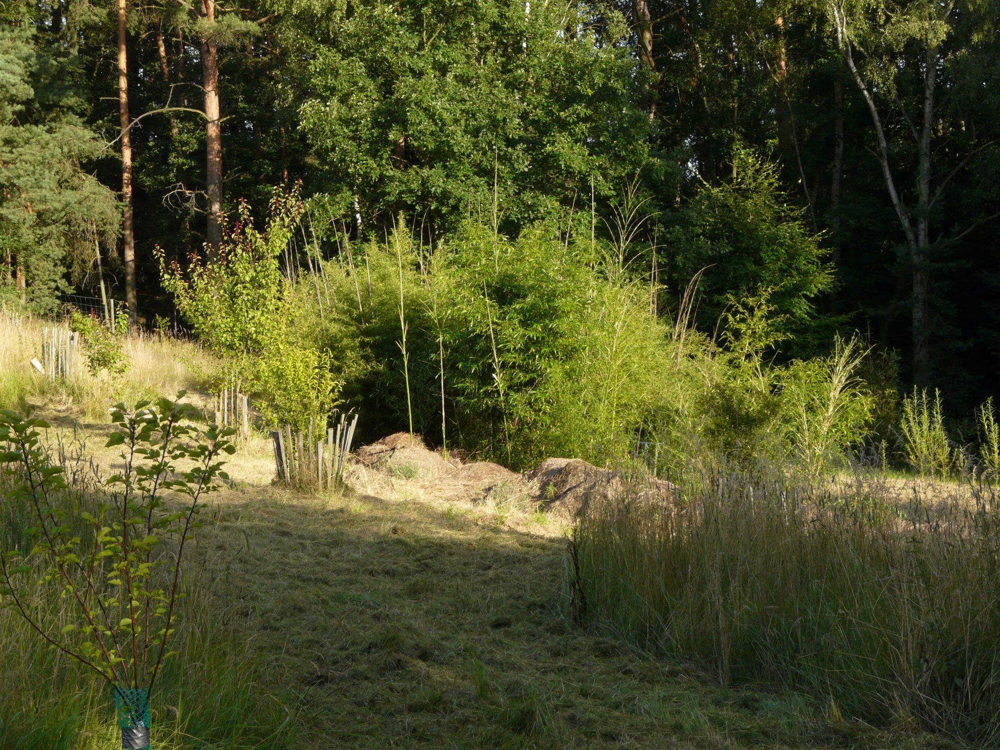 bambusy - vyhonky
