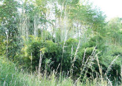 bambusovy hajek - vyhonky