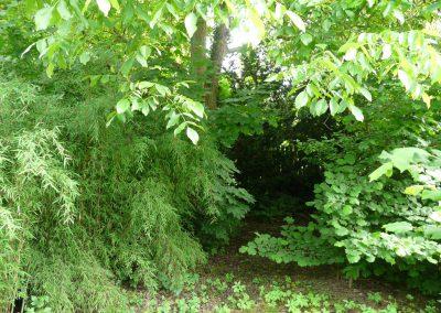 jedly les - tajemne zakouti