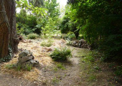 jedly les - meditacni misto