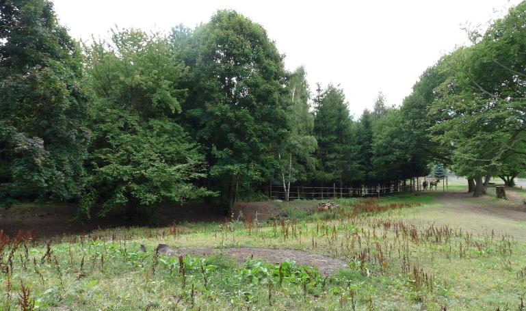 Design jedlé lesní zahrady – Loučná