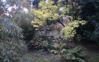 Proč zakládat a kultivovat lesní zahrady?