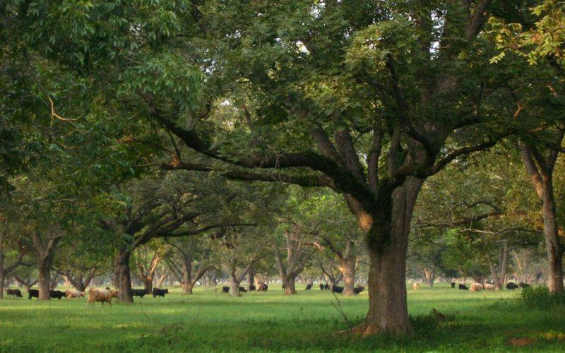 Lesní zahrady I – Agrolesnické systémy a historie zemědělství