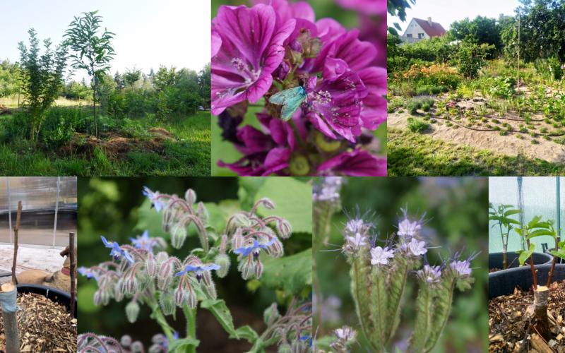 Dobrodružství tvorby jedlých lesních zahrad – II