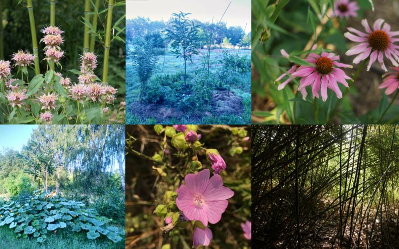 Dobrodružství tvorby jedlých lesních zahrad – prázdninový workcamp