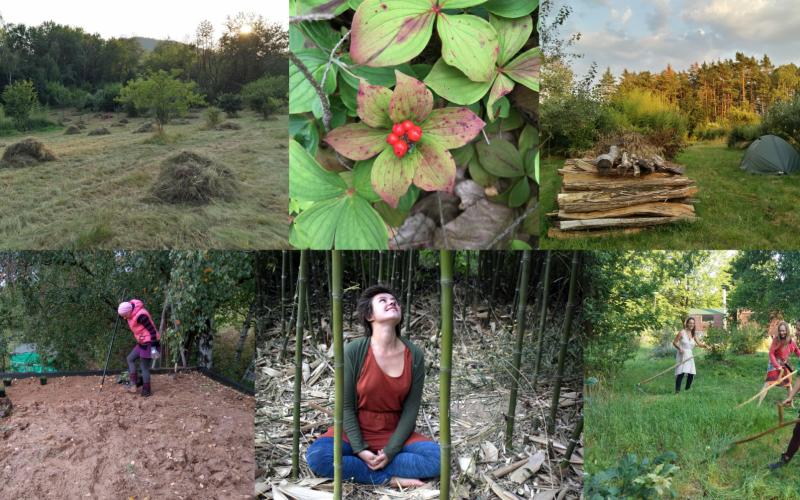 Dobrodružství tvorby jedlých lesních zahrad – IV