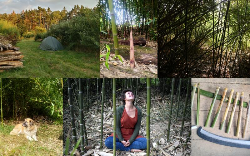 Bambusový víkend v Jedlém Pralese II